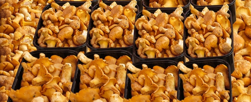 Japan looks to combine solar power with mushroom farming